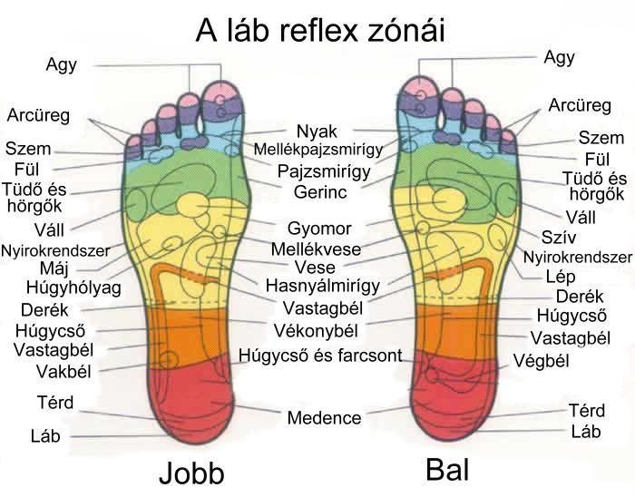 A láb reflex zónái